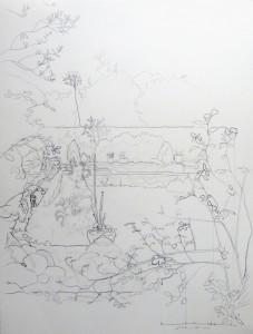 Fran's garden, pencil on paper, 2016